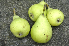 Green Slipper pear ui.png