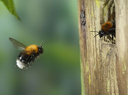 tree-bumblebee.jpg