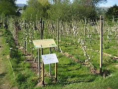 IMG_2702 orchard & both boards.JPG