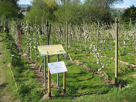 IMG_2702 orchard & both boards.JPG