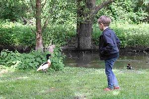 Le Parc aux oiseaux pour les enfants