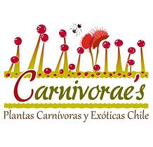 carnivoraes