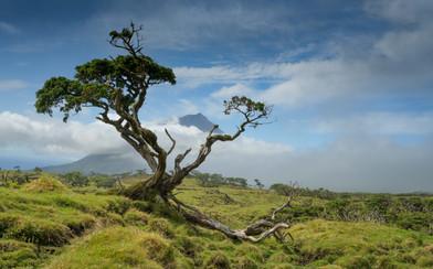 Mount Pico tree (1 von 1).jpg