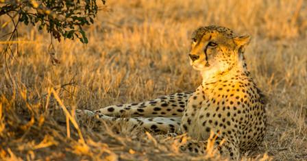 gepard (1 von 1).jpg