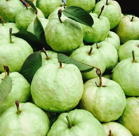 giffarine-fertilizer-guava.png