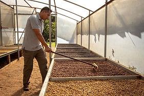 Tour de Café Monteverde - Guía secando c