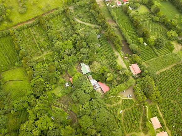 Tour de Café Monteverde - Foto aérea de