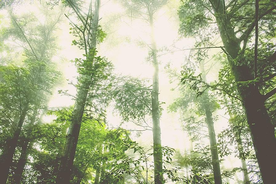 Foggy%20Forest_edited.jpg
