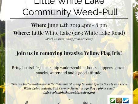 Invasive Iris Pull - June 14