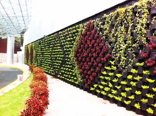 Jardines verticales; mejoran la calidad de vida en las ciudades.