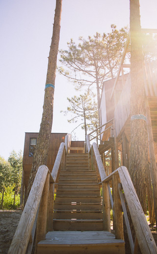 Stairs to the Trees