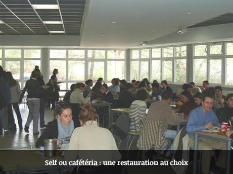 Self ou cafeteria - Une restauration au choix