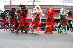 Mass of lions Chinese New Year