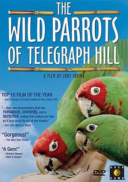 Wild Parrots DVD