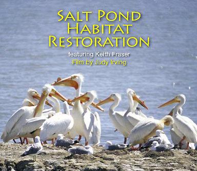 DVD: Salt Pond Habitat Restoration