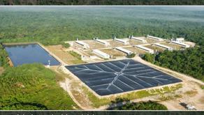 Granja de cerdos en Yucatán contamina el agua de cenotes