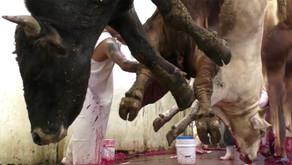 La carne que comemos también es un riesgo de pandemia