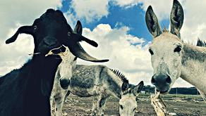Nos han educado para creer que los animales no tienen derechos ni sentimientos: Activistas