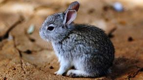Senado de México prohíbe uso de animales en la producción de cosméticos