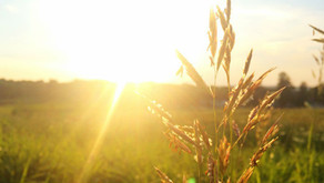 Estudio vincula falta de vitamina D con mayor riesgo de morir por covid-19