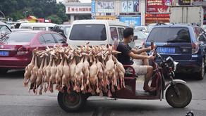 VIDEO: Mercados de carne donde se habría originado el coronavirus siguen operando en China