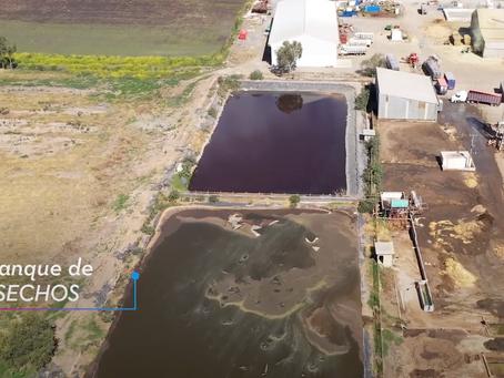 VIDEO: Drones muestran estanques repletos de excremento y orina de animales en granjas