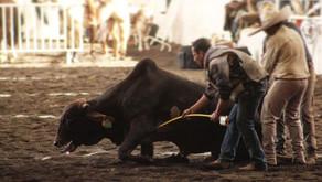 Exhiben maltrato animal en congreso nacional de charrería en México