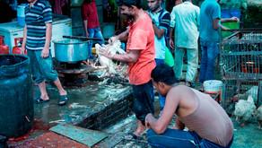 ONG pide a la ONU prohibir mercados de animales vivos por focos de infección y maltrato
