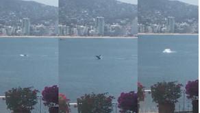 VIDEO: Captan ballena en Acapulco tras ausencia de turistas por covid-19
