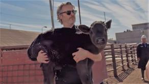 VIDEO: Joaquin Phoenix rescata a una vaca y su cría de un matadero