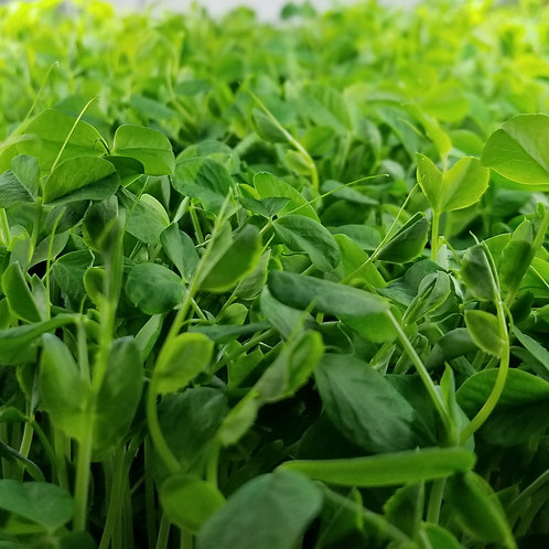 Speckled Pea Shoots 60g