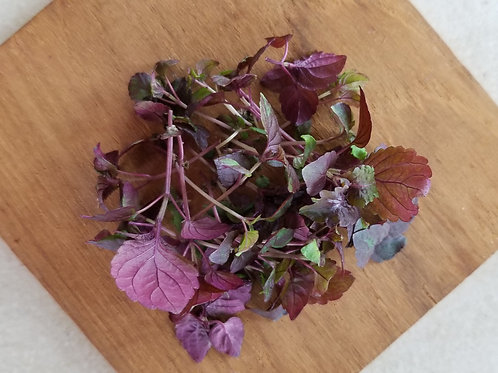 Red Shiso 14g