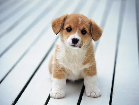 5 TIP'S TO IMPROVE YOUR DOG'S BEHAVIOR