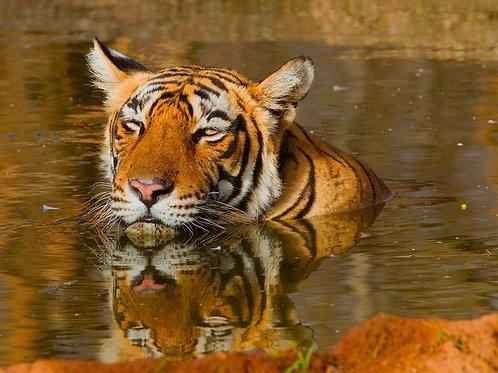 Rathambore Tiger Preserve