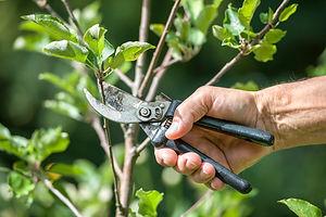 ZIELINSKI'S TREE SERVICES