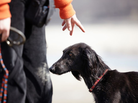 HOW TO HIRE THE RIGHT DOG TRAINER
