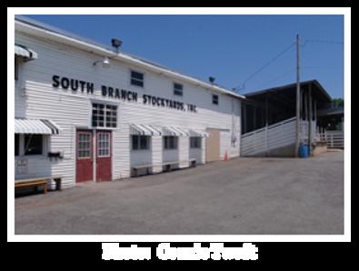 South Branch Valley Livestock Exchange