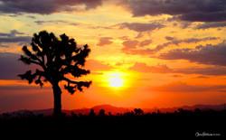 mojave-sunrise-chris-hatounian