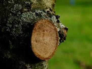 Winter Tree Maintenance and Pruning