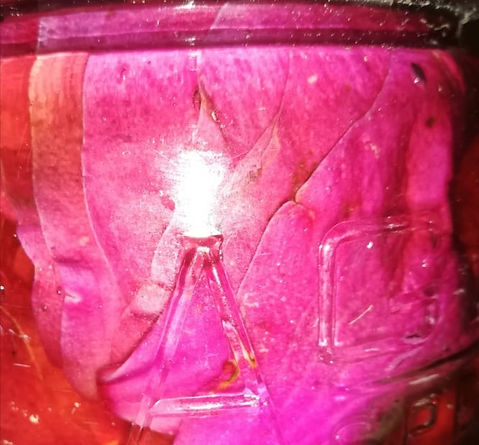magnolioa%20pickle_edited.jpg
