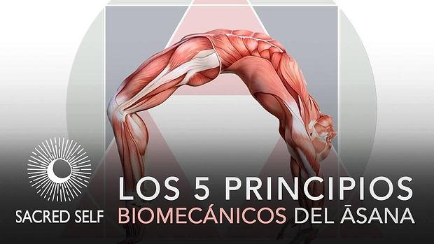 Biomecánica del Asana Banner.jpg