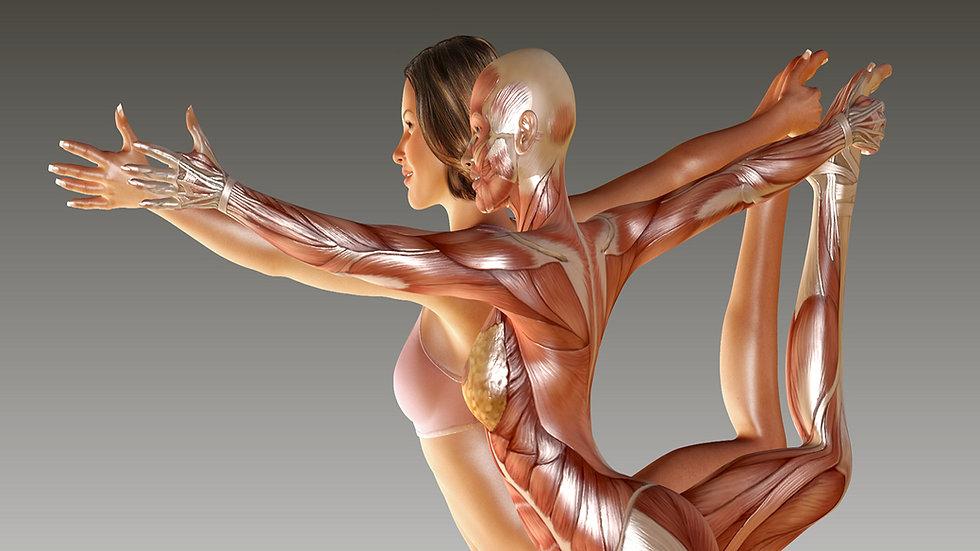 Anatomia-Ad-NoTextKajabi NoText.jpg