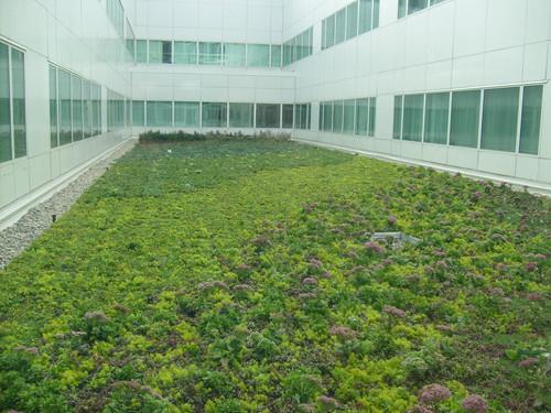 1287751175Aroura-Sinai Green Roof 019.jp