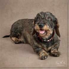 Dog Photographer Crowborough.jpg