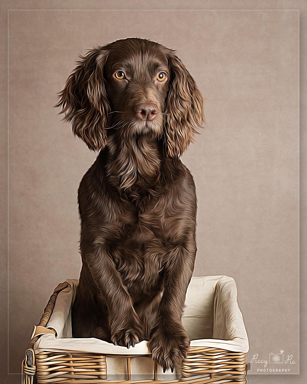 Dog Photo Crowborough