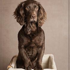 Dog photography Crowborough