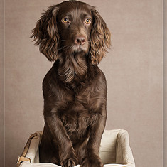 Dog photography Crowborough