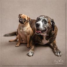 Pug and Friend