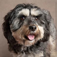 Dog portrait photographer Hailsham