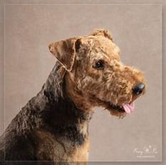 Portrait Dog photographer Crowborough